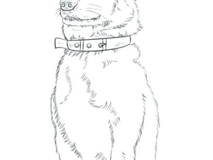440x330 Corgi Coloring Pages Synthesis.site