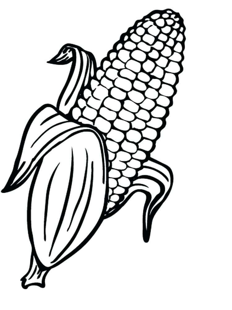 750x1000 Corn For Coloring Page Cob