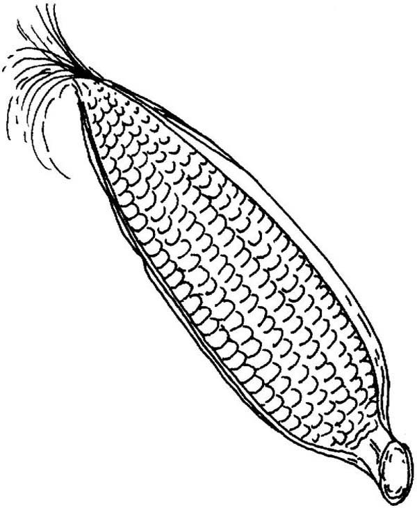 600x730 Mesmerizing Corn Coloring Pages 17 In Books With