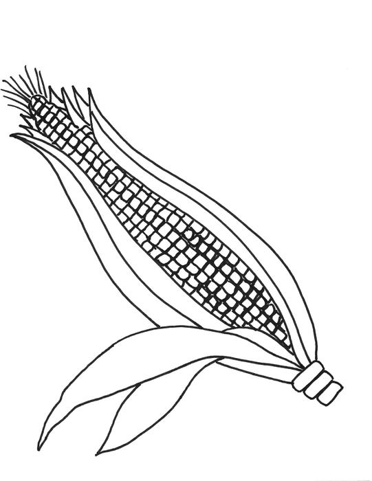 corn stalks drawing at getdrawings com