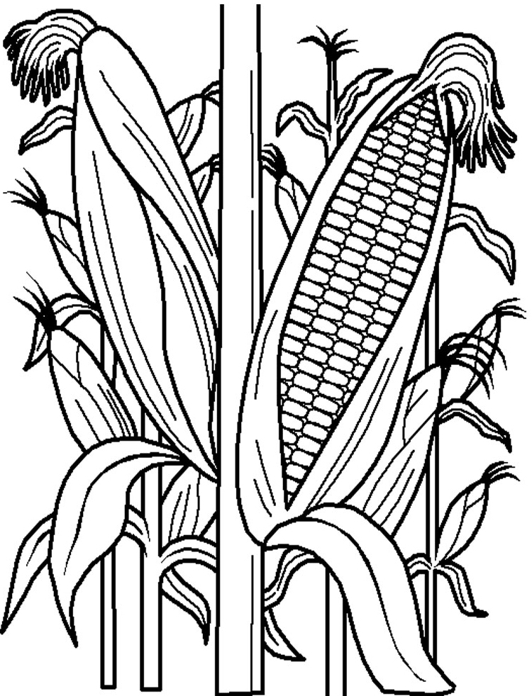Corn Field Drawing at GetDrawings.com | Free for personal use Corn ...
