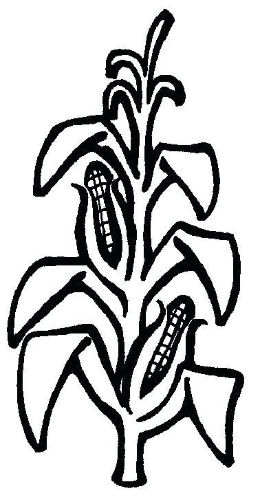 corn plant drawing at getdrawings com