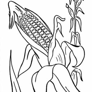 300x300 Roasting Corn Cob Coloring Page Sun