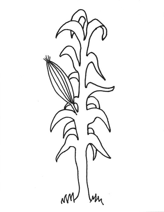 corn stalk drawing at getdrawings com free for personal use corn