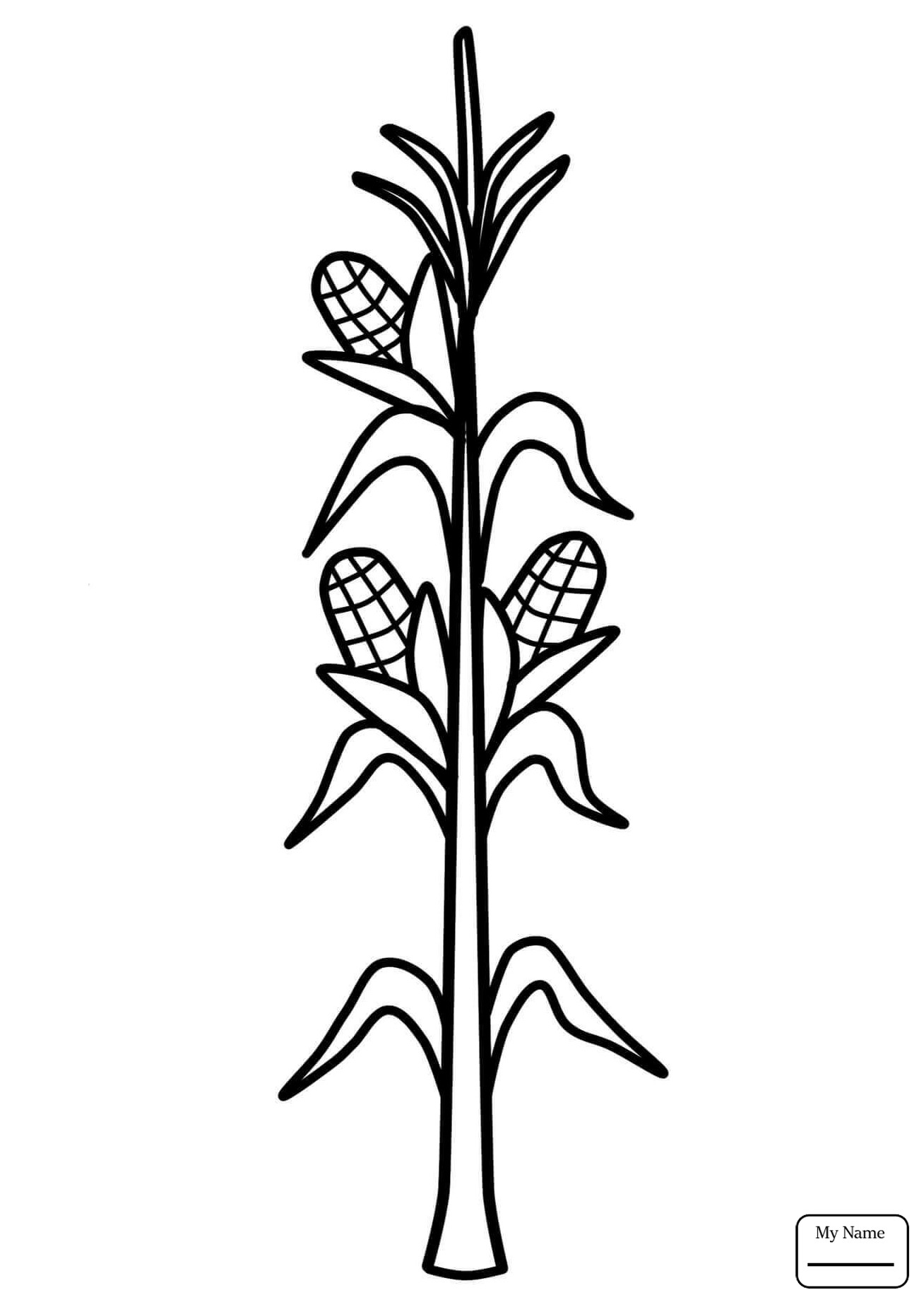 Corn stalk drawing at free for personal for Corn stalk template