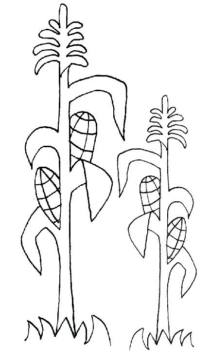 432x720 Corn Stalk Coloring Page Thanksgiving Coloring Pages See More