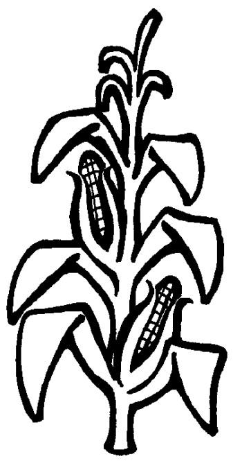 350x678 Corn Stalk Images Clip Art