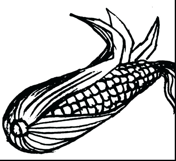 728x666 Ear Coloring Page Tasty Corn Ear Coloring Page Elephant Ear Plant