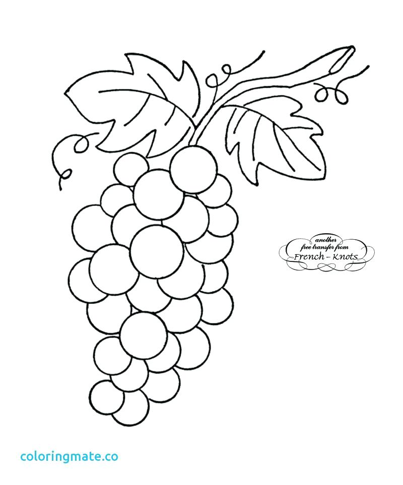 800x961 Grapes Coloring Pages Corn Stalk Coloring Page Coloring Pages Corn