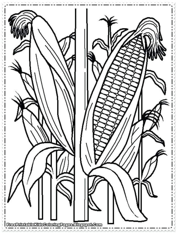 728x958 Corn Coloring Page Fancy Candy Corn Coloring Page On Line Drawings