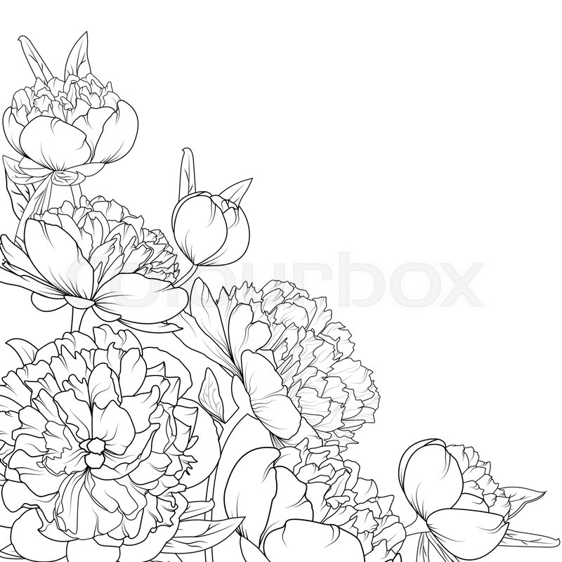 800x800 Peony Rose Garden Spring Summer Flowers Black And White Detailed