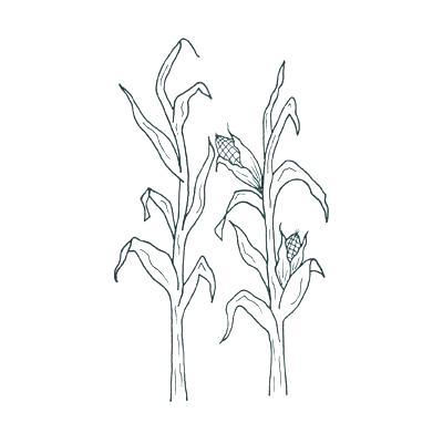 fine cornfield coloring page sketch coloring page ideas marketel