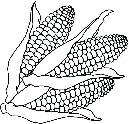 512x489 Corn For Coloring Corn Stalk Coloring Page Corn Coloring Pages