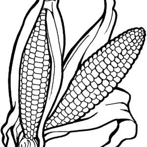 300x300 Corn Stalk Coloring Page