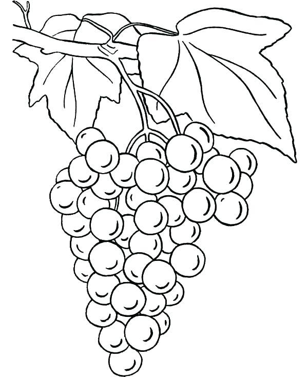 600x734 Corn Stalk Coloring Page Corn Stalk Coloring Page Grapes Grapes