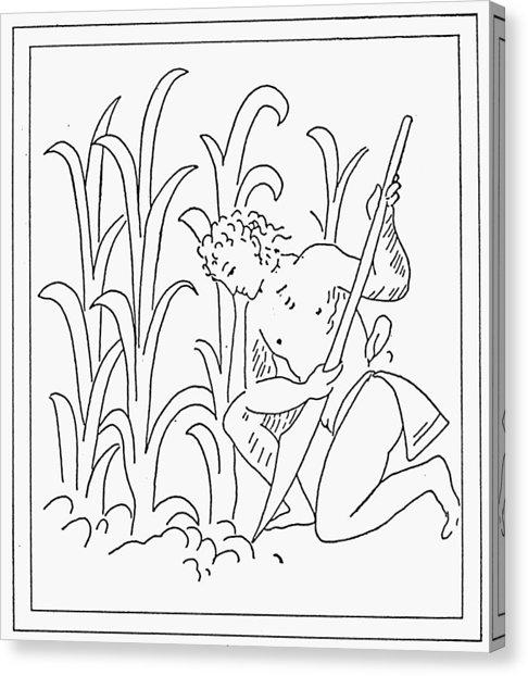 486x622 Cornstalk Canvas Prints