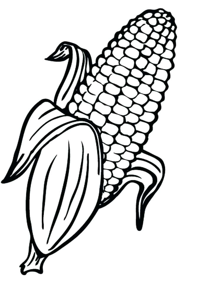 750x1000 Here Are Corn Coloring Page Pictures
