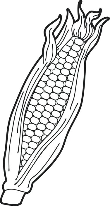 376x700 Corn Coloring Sheet Sweet Corn Coloring Sheet Popcorn Bucket