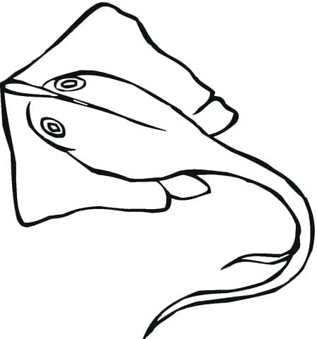 448x480 Stingray Coloring Pages Octopus Coloring And Squid Stingray