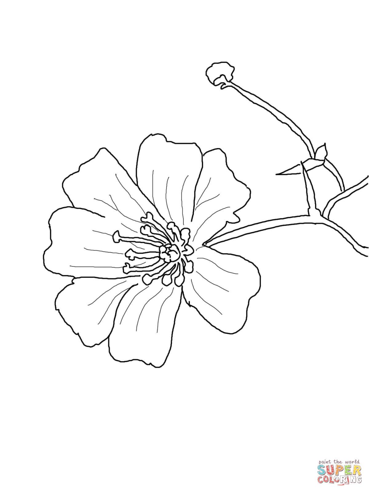 Cosmos Flower Drawing at GetDrawings