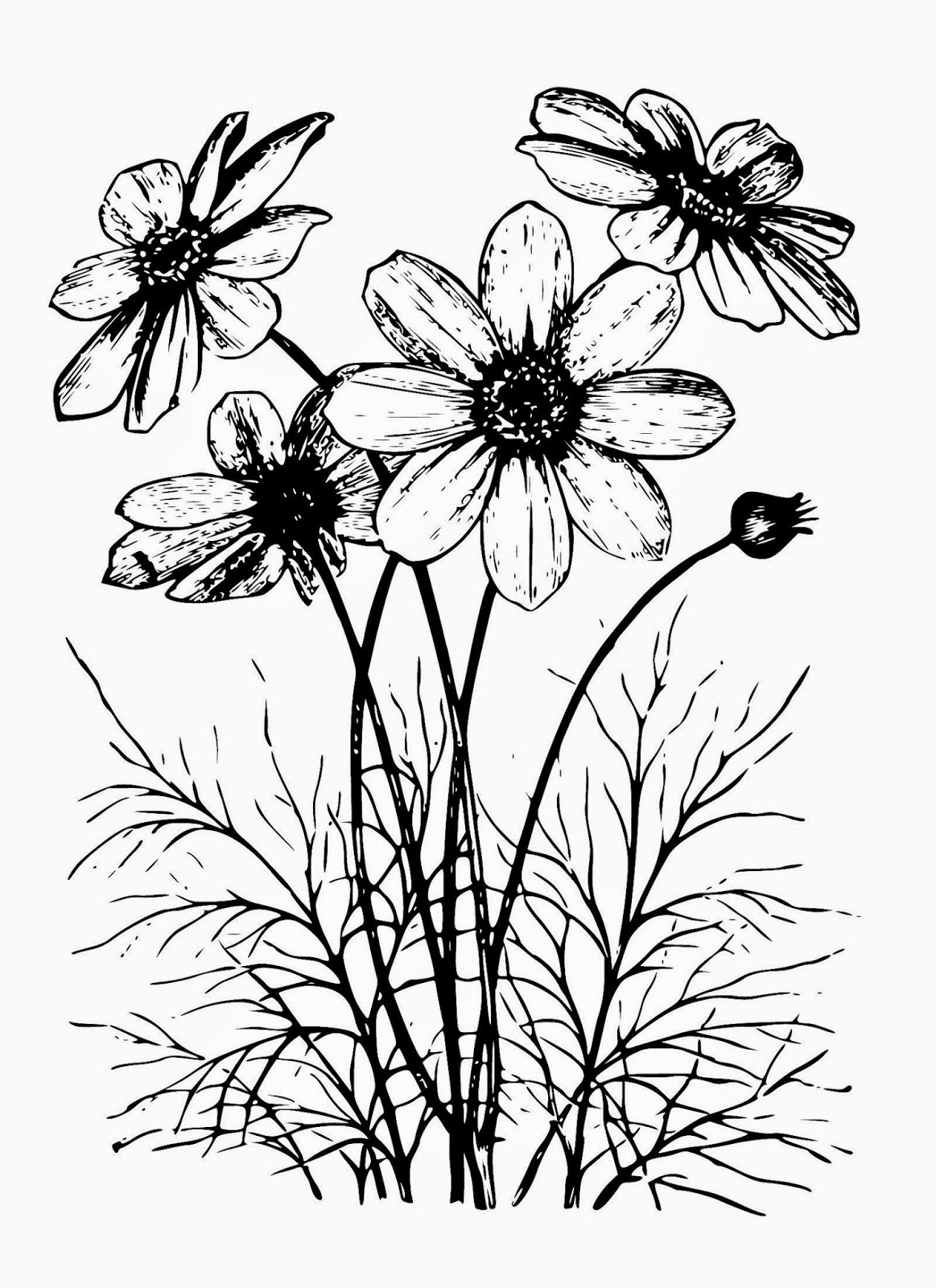 Cosmos Flower Drawing At Getdrawings Free For Personal Use