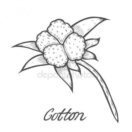 450x450 Cotton Boll Stock Vectors, Royalty Free Cotton Boll Illustrations