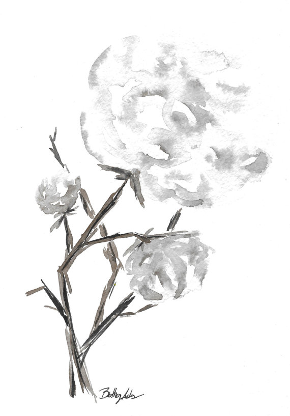 570x817 Giclee Prints Set Of Two Cotton Stems Cotton Boll Cotton
