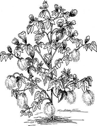 328x425 Cotton Boll Clip Art, Free Vector Cotton Boll