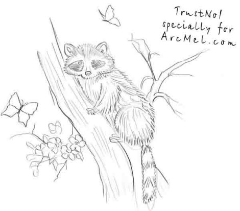 470x413 How To Draw A Raccoon Step 4 Drawing Raccoons