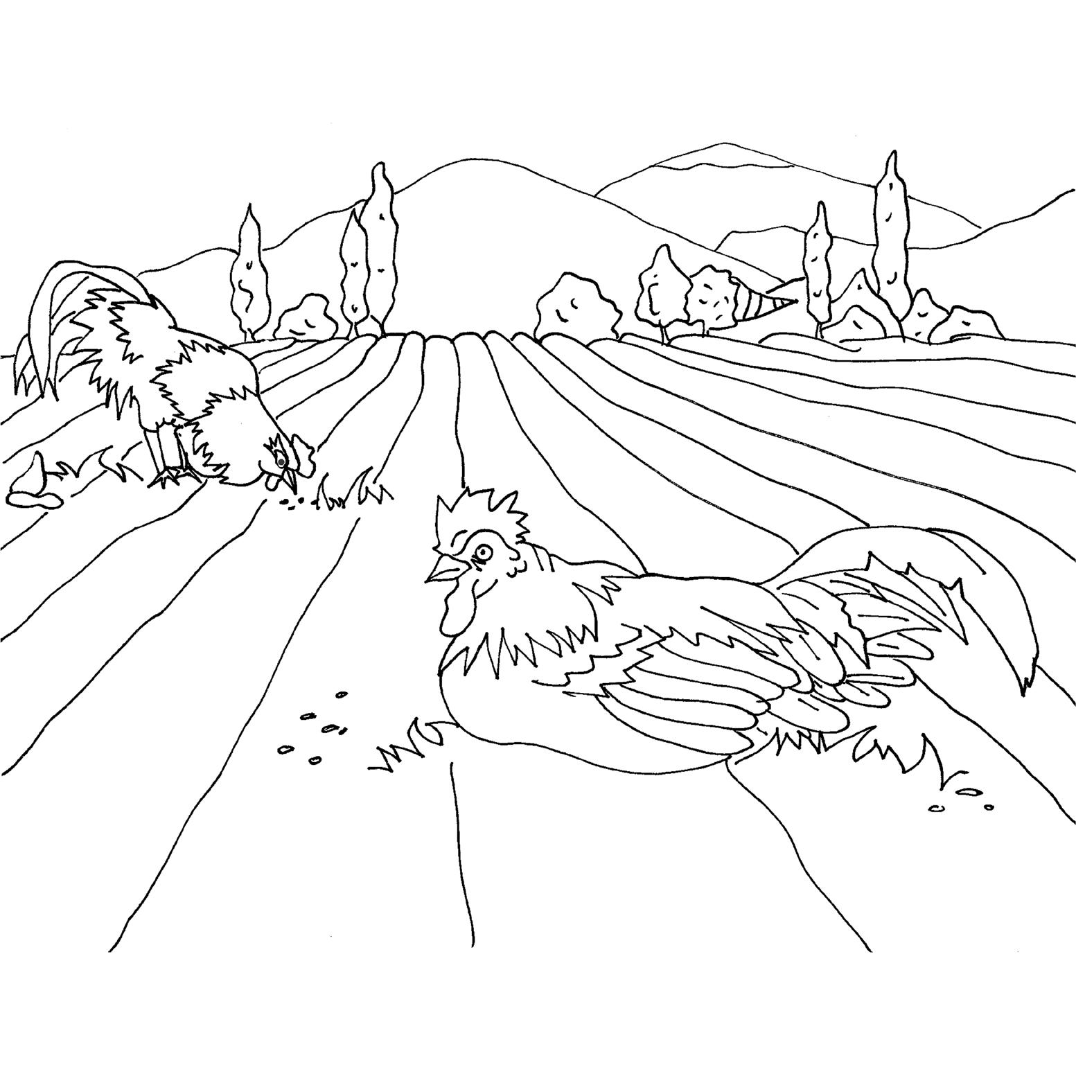 1553x1553 Countryside
