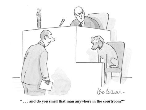 473x355 Courtroom Humor