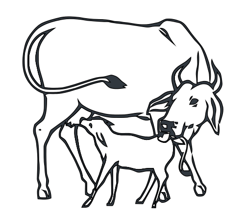 500x448 Filecow And Calf Inc.svg