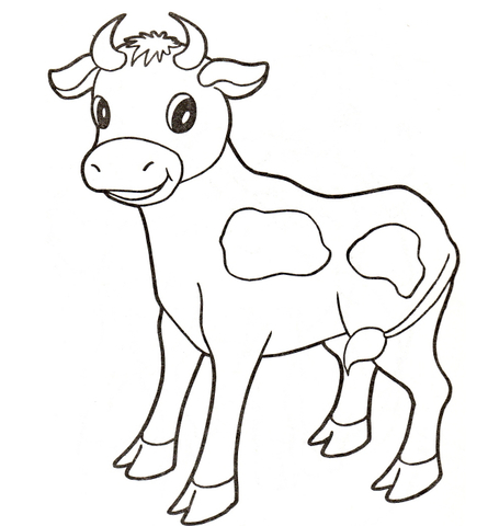 445x480 Baby Cow Coloring Page Free Printable Coloring Pages