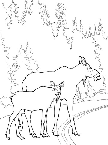 360x480 Moose Cow With Calf Crossing The Road Coloring Page Free
