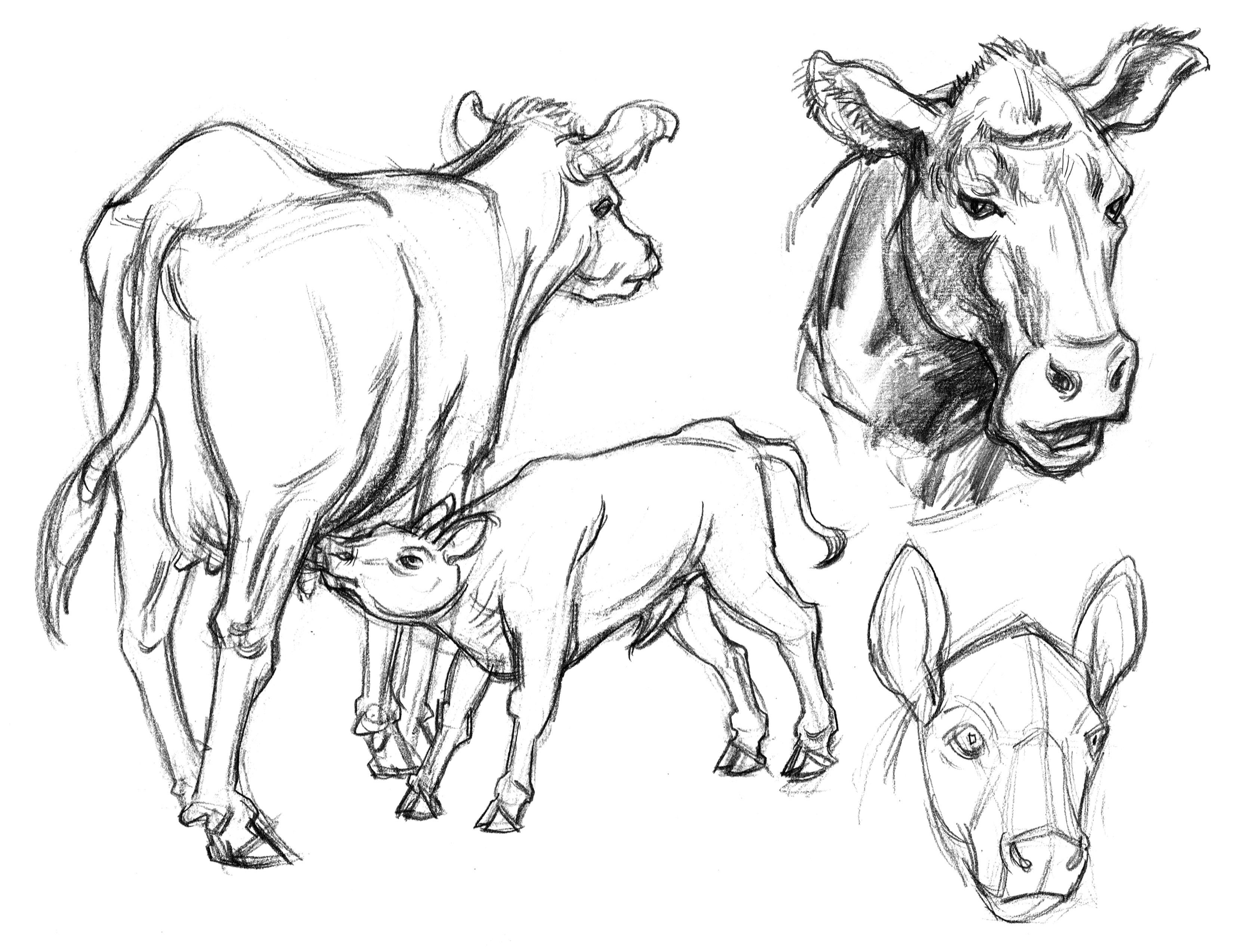 3300x2549 Garygeraths Animal Drawing
