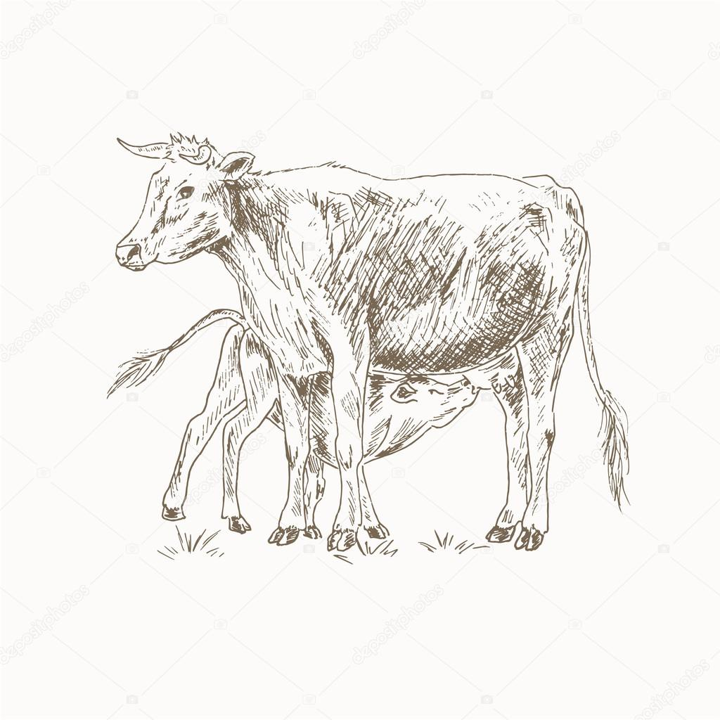 1024x1024 Mother Cow Calf Stock Vectors, Royalty Free Mother Cow Calf