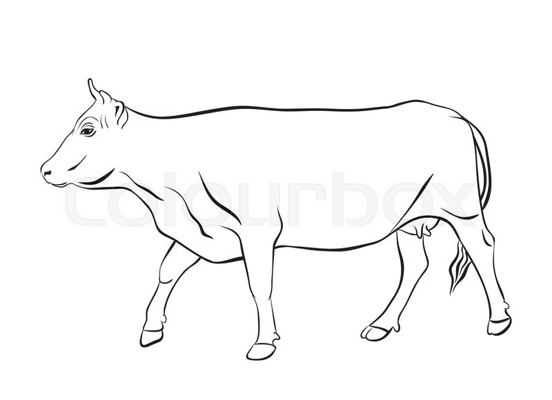 800x580 Cow Ornament Vector. Cow Drawing With Floral Ornament Decoration