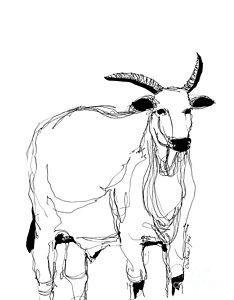 234x300 Cow Art Drawings