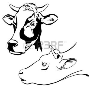 300x300 Adult Cow Face Drawing Cow Face Drawing. Cow Face Cartoon Drawings