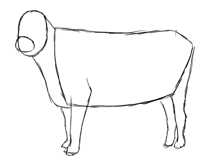 680x509 How To Draw A Cow