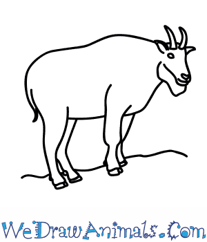300x350 How To Draw A Mountain Goat