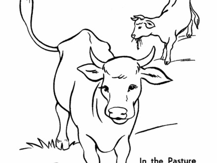 Cow Drawing For Kid