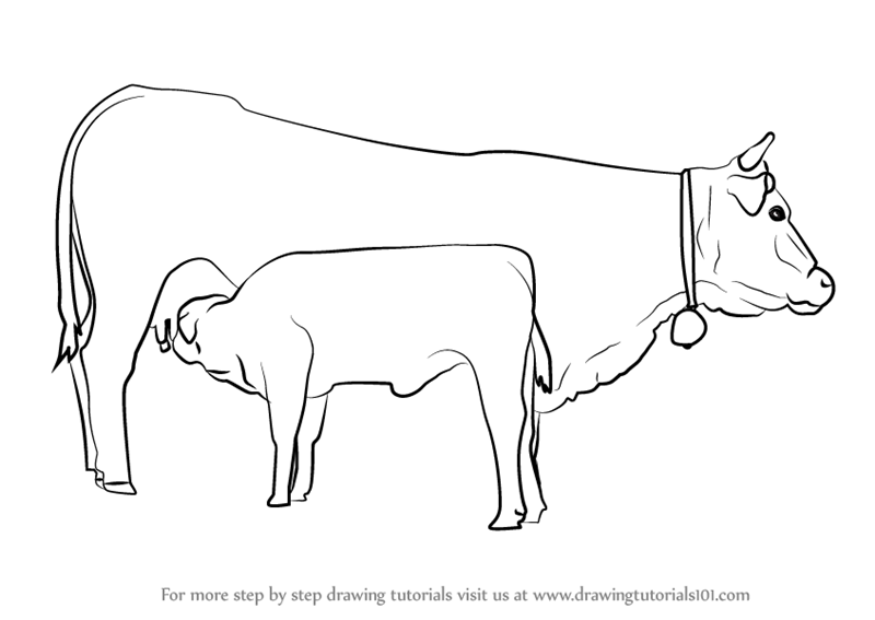 800x567 Learn How To Draw Cow And Young Calf (Farm Animals) Step By Step
