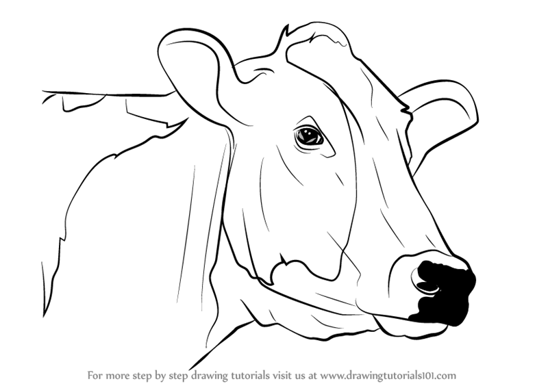 800x567 Learn How To Draw A Cow Face (Animal Faces) Step By Step Drawing