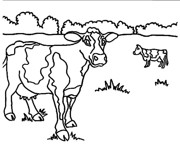 600x503 Drawing Dairy Cow Coloring Pages