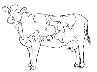 320x239 How To Draw A Cow Cow, Drawings And Animal