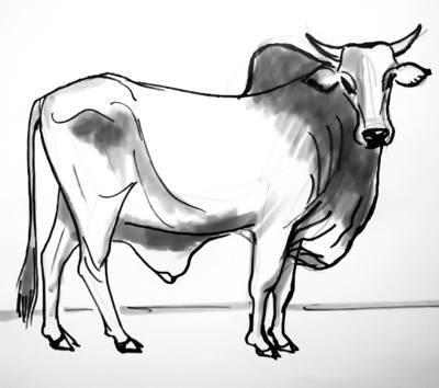400x354 How To Draw A Zebu