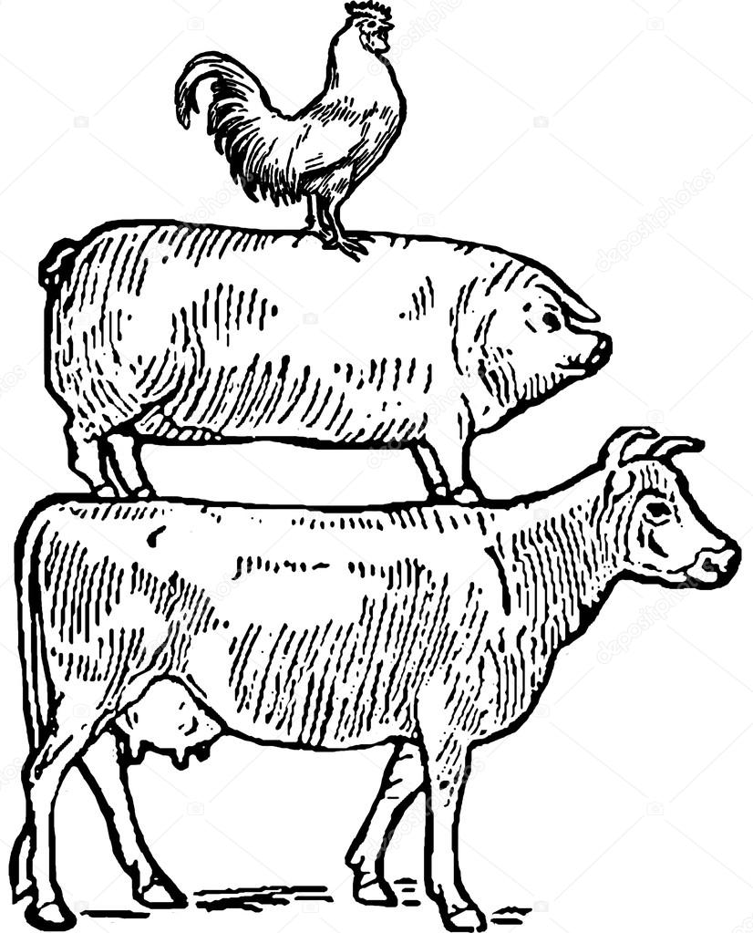 826x1023 Vintage Drawing Cow, Pig And Rooster Stock Photo Unorobus