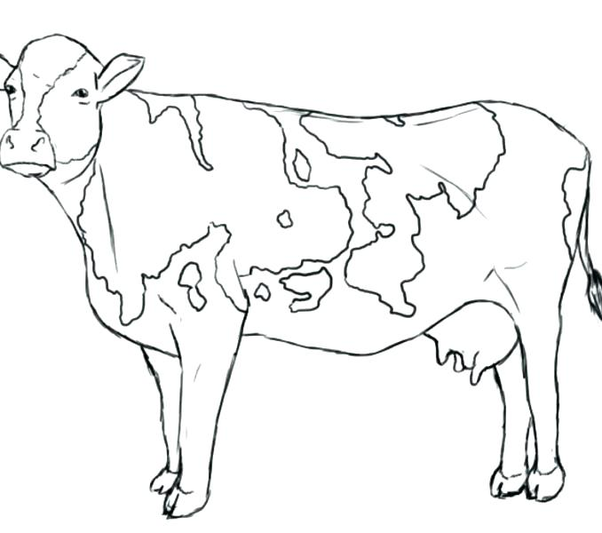 678x600 Coloring Pictures Of Cows Pin Drawn Cow Coloring Page Coloring