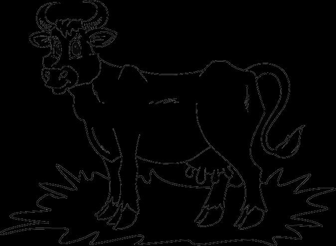 674x494 Cow